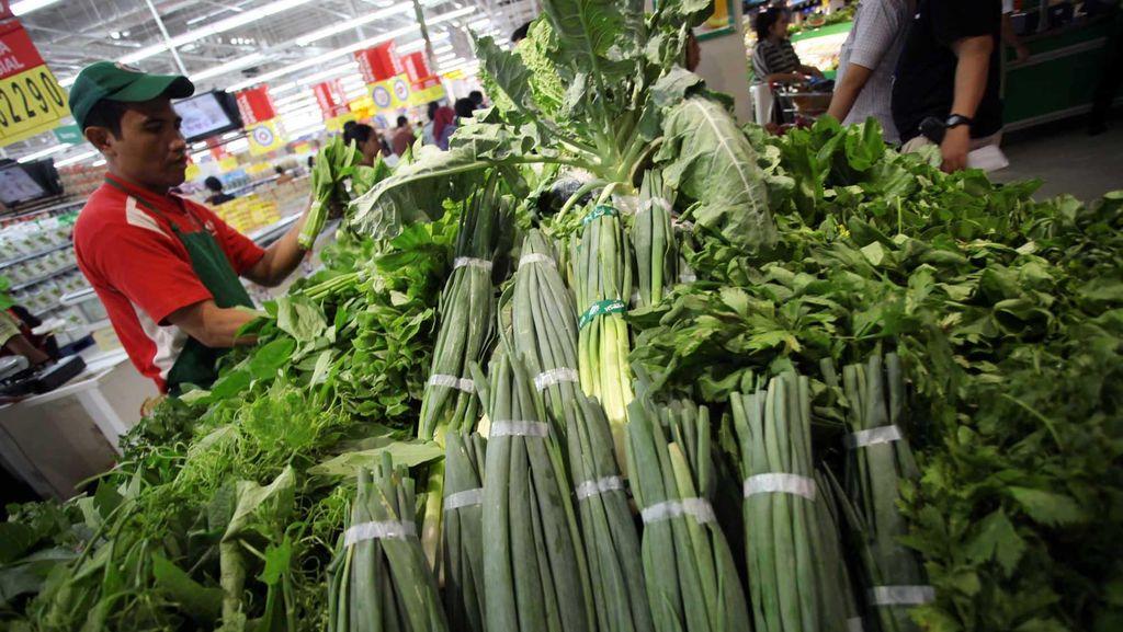 Kementan: 900 Ton Benih Hortikultura Diekspor ke 10 Negara