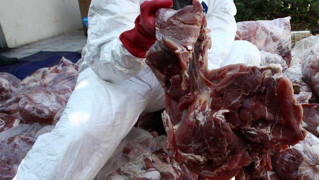 Harga Daging Celeng Lebih Murah dari Ayam