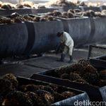 Norwegia Setop Biofuel dari Sawit, RI Ancam Tak Impor Ikan Salmon