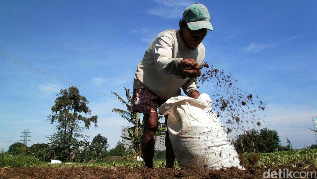 400.000 Ha Tanah Terlantar Tersebar di RI, Mau Dipakai untuk Apa?