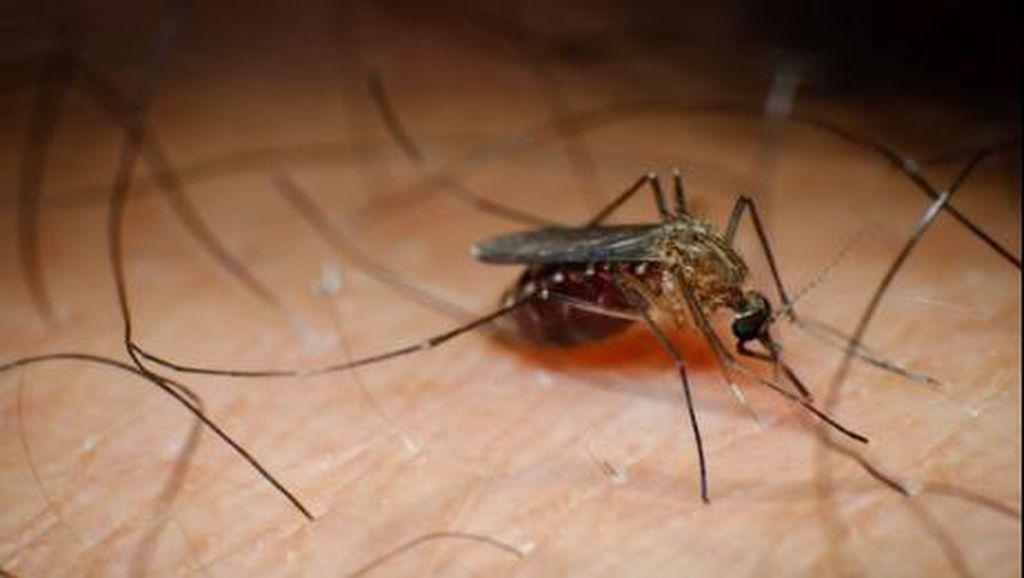 Vaksin Dengue yang Dikabarkan Berisiko Belum Terdaftar di Indonesia