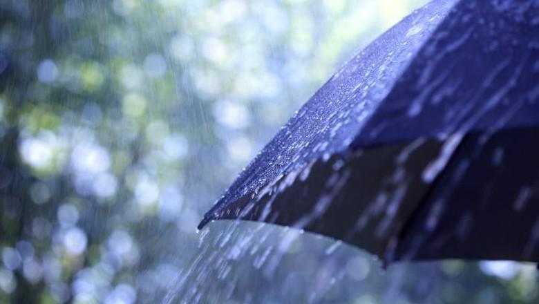 2 Pohon di Jakbar Tumbang Setelah Diterjang Hujan
