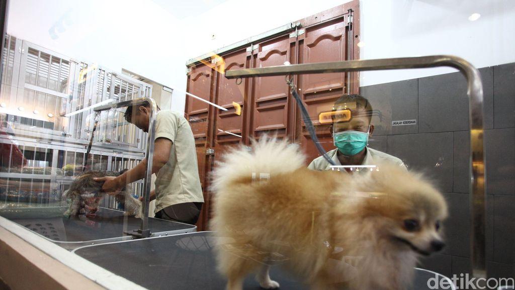 Mengintip Peluang Bisnis Penitipan Anjing