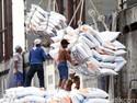 Impor Beras Dinilai Bakal Berdampak ke Penurunan Harga Gabah