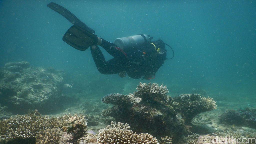 Susi Larang Bisnis Karang Laut untuk Akuarium