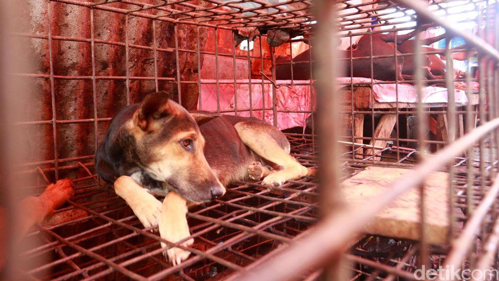 Video Anjing Dibakar Hidup-hidup di RI Jadi Sorotan Internasional