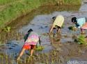 Satu Desa Satu Komoditas Unggul, Darmin: Jangan Sampai Kendor
