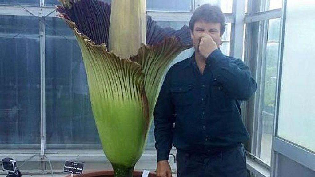 Bunga Bangkai Sumatera Pukau Ribuan Wisatawan di Australia