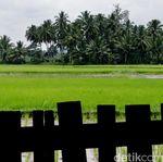 Solusi Mentan Atasi Kerugian Sawah Terendam Banjir