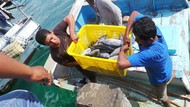 Begini Jurus Jokowi Genjot Konsumsi Ikan