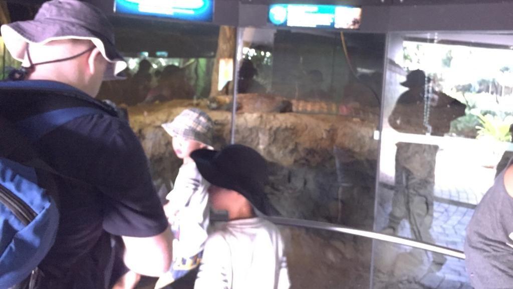Komodo Jadi Hewan Favorit Pengunjung di Kebun Binatang Sydney