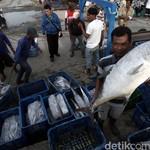 Begini Cara KKP Genjot Ekspor Ikan RI