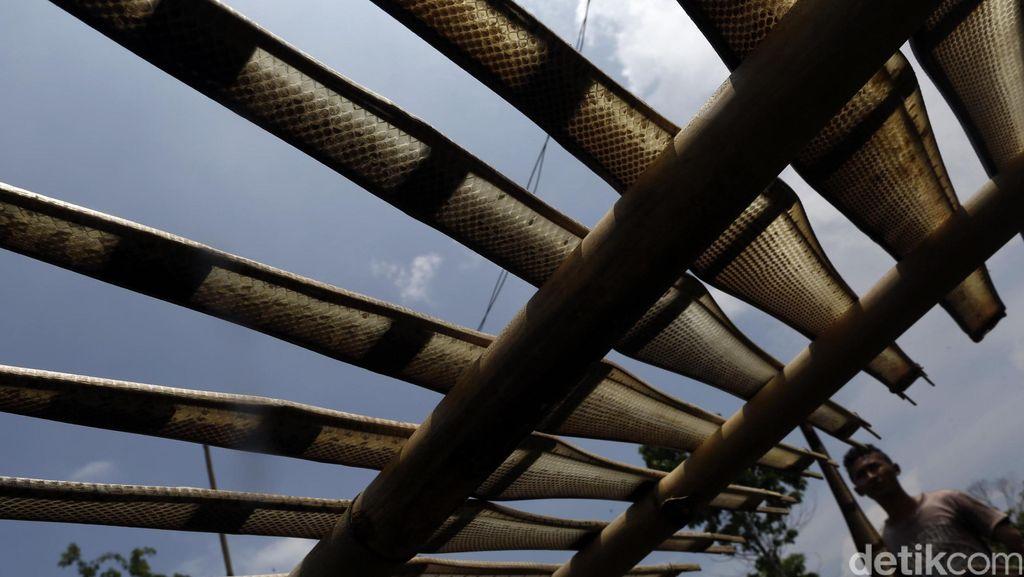 Mengintip Rumah Potong Ular di Cirebon