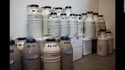 Fotografer Laerke Posselt mengabadikan keseharian di Cryos International, bank sperma terbesar di dunia.