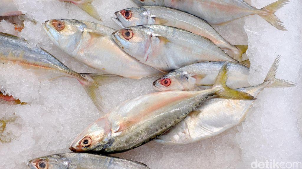 Jangan Asal Makan! Begini Cara Pilih Ikan yang Segar dan Sehat