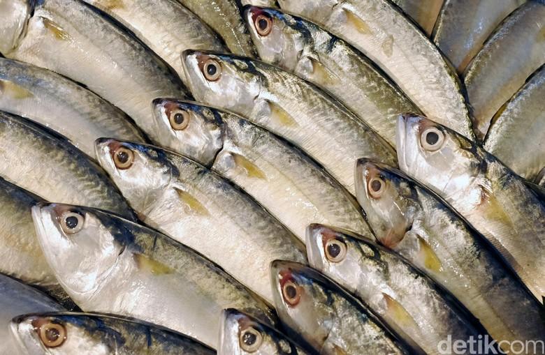 RI Ekspor Ikan Beku ke Spanyol Rp 108 M