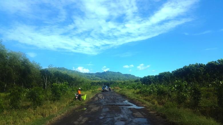 Menteri LHK Ingin Kembangkan Taman Nasional Alas Purwo