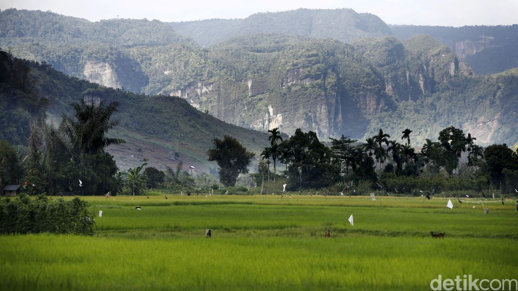 Gandeng TNI AD, Kementan Cetak 126.437 Ha Sawah