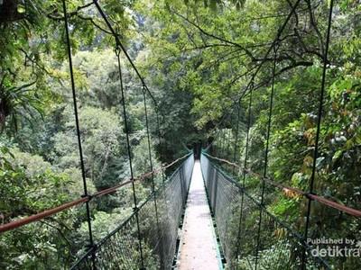 3 Jembatan Kanopi Keren dari Indonesia