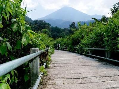 Ssst.. Ada Jembatan yang Dilewati Macan Tutul di Gede Pangrango