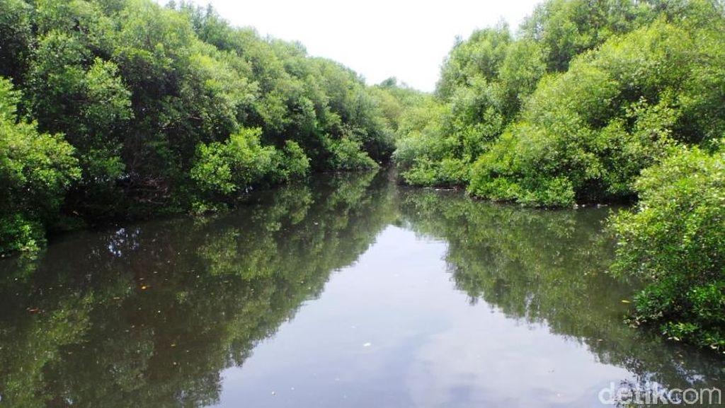 Long Weekend di Jakarta, Paling Asyik Main Ke Hutan Mangrove