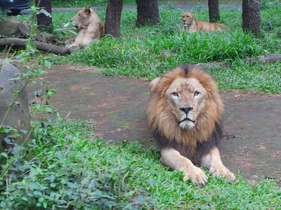Safari Run dan & Balap Sepeda Ramaikan Long Weekend di Taman Safari Prigen