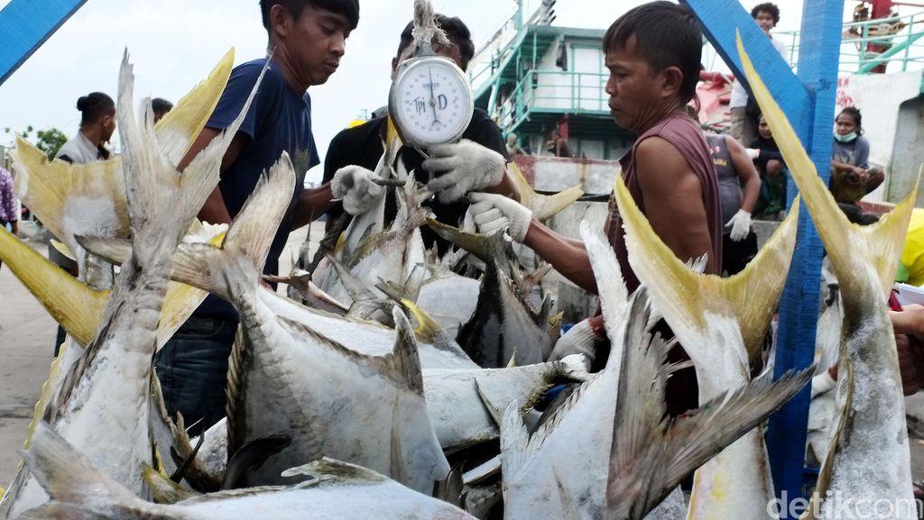 Aktivitas Bongkar Muat Ikan di Muara Angke