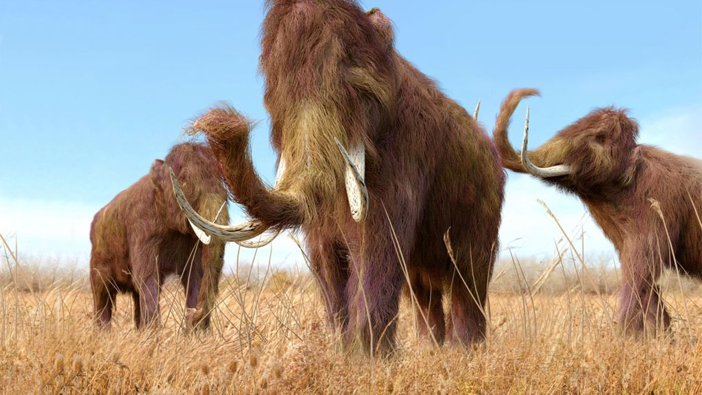 Proyek Mammoth Park
