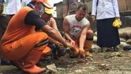 Sweeping Flu Burung di Jaktim, Petugas Musnahkan Unggas Milik Warga