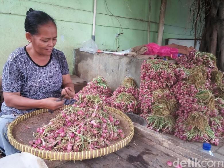 Harga Bawang Merah Anjlok, Mentan Minta Bulog Beli dari Petani