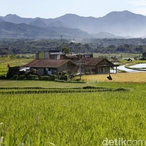 FAO Minta Pemerintah RI Genjot Pembangunan di Pedesaan