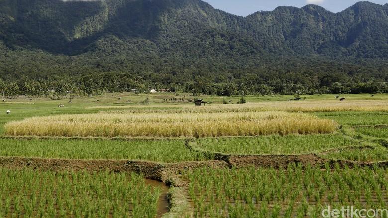 Kementan Fokus Atasi Rentan Rawan Pangan di Indonesia Timur