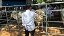 Jokowi Tinjau Lokasi Penggemukan Sapi di Rumpin, Bogor