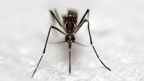 Begini Cara Mengatasi Gigitan Berbagai Jenis Serangga