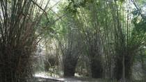 Mau ke Gua Batu Cermin, Lintasi Dulu Jalan Setapak di Antara Bambu Duri