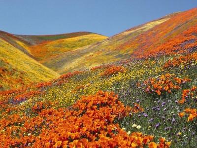 Lembah Bunga Seindah Surga dari India