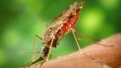 WHO Khawatirkan Peningkatan Kasus Malaria di Venezuela