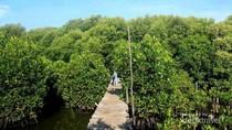 Surabaya Bakal Punya Kebun Raya Mangrove Seluas 200 Hektare