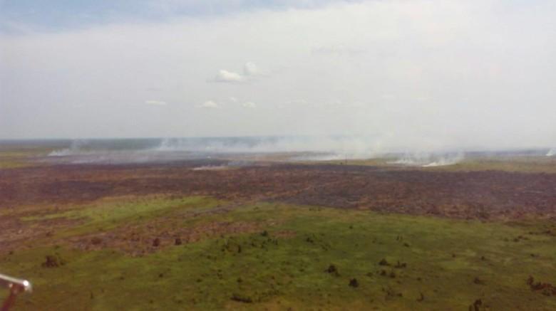 Ini Strategi Kementerian LHK Setop Kebakaran Hutan