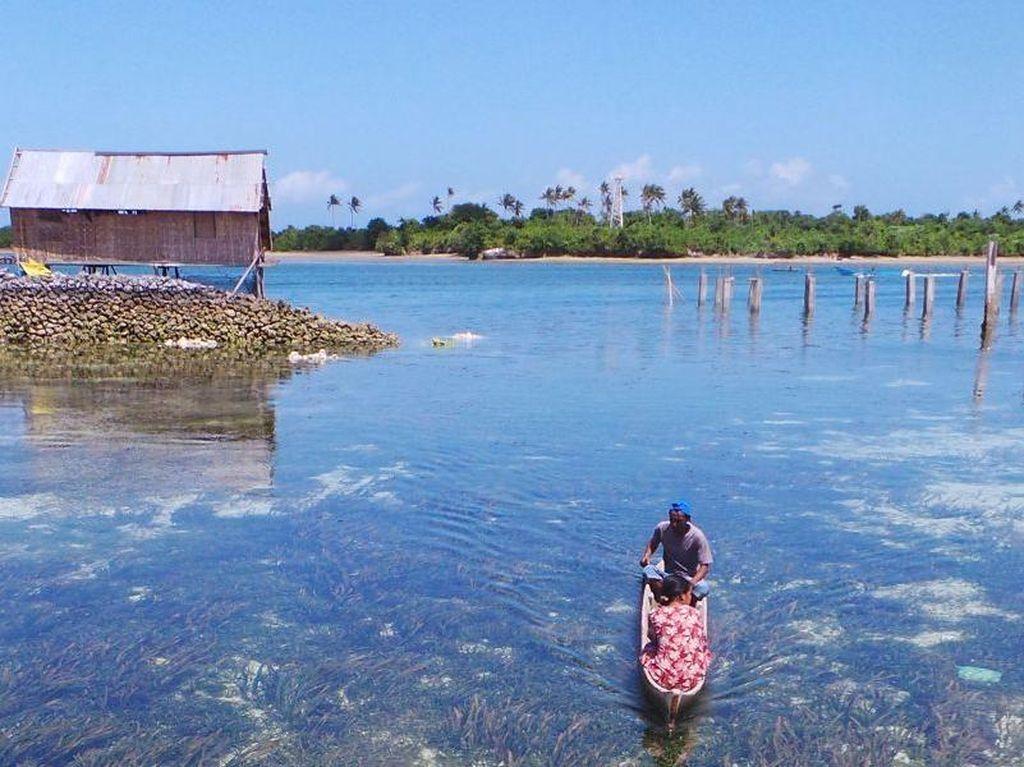 Adaptasi Genetik di Balik Kemampuan Menyelam Suku Bajo yang Mengagumkan