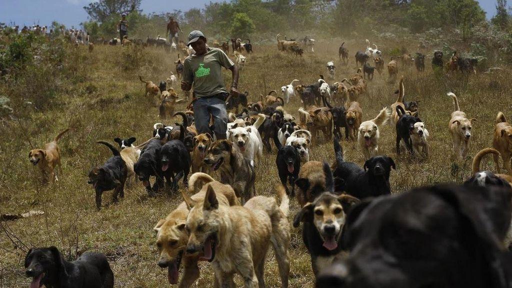 Surga Untuk Anjing Terlantar di Kosta Rika