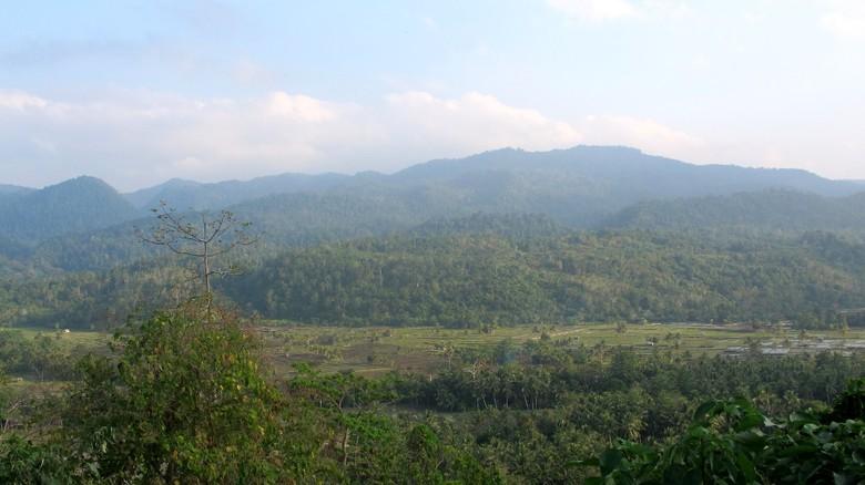 Gajah Liar Ditemukan Mati di Bengkalis Riau, Ada Luka Punggung