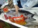 Ingin Ongkos Angkut Ikan RI Lebih Murah? Ini Saran Pengusaha Kapal