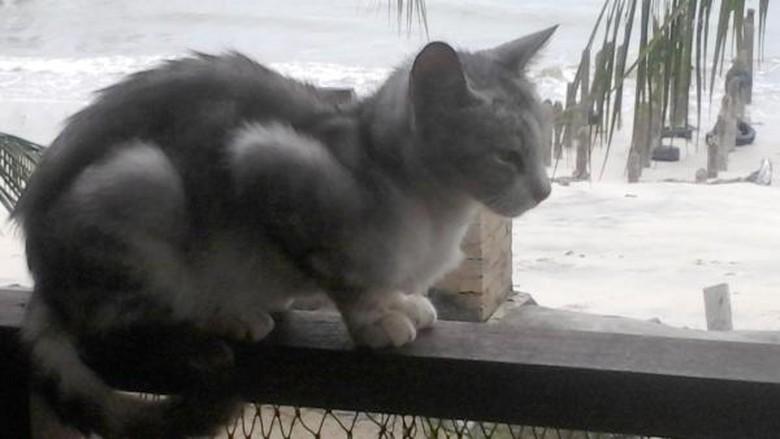 Foto: (catbeachpenang.com)