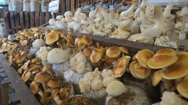 Aneka jamur yang jadi bahan makanan (Fitraya/detikTravel)