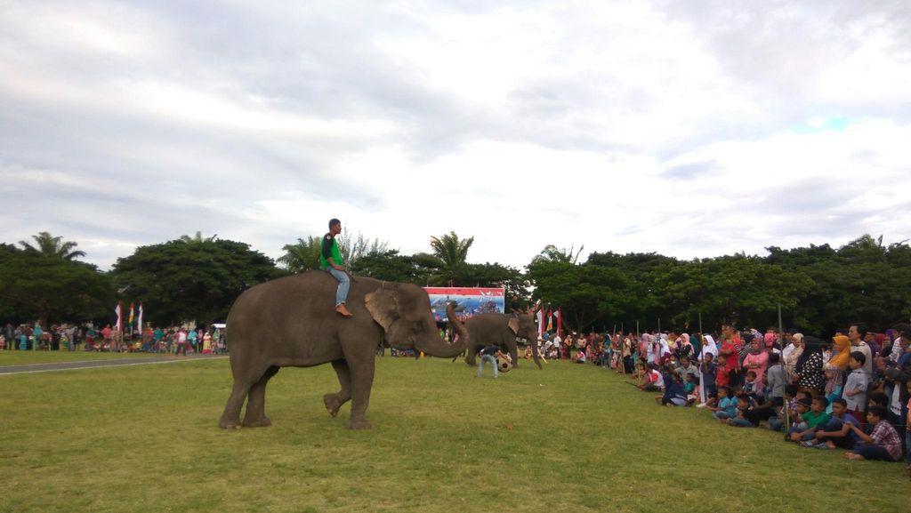 Hibur Warga Aceh, 2 Gajah Ini Asyik Berjoget & Main Bola