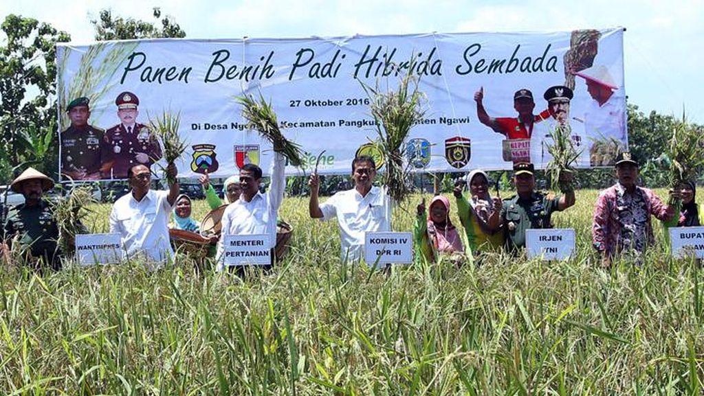 Capaian Sektor Pertanian Jelang 3 Tahun Jokowi-JK