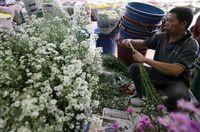 Traveler bisa ikut belajar merangkai bunga di Pasar Bunga Rawa Belong