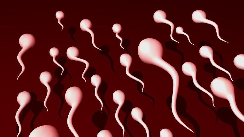NASA Uji Reproduksi Sperma di Luar Angkasa