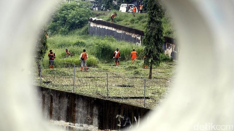 Pasukan Oranye Bersihkan Rumput Liar di KBT